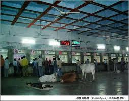 Các loài gia súc, bò, trâu, ngựa, heo, chó trong nhà ga Côn Minh. Vân Nam nổi tiếng nhờ thủ đô Côn Minh. Ảnh: Nhất Biến.