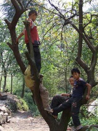 Vào đầu làng thấy các em độ tuổi tiểu học, trèo trên cây vô tư nô đùa, các em bị nhà nước Bắc Kinh miệt thị không cho đến trường học, vì cái tội người Việt tị nạn. Ảnh: Nhất Biến.