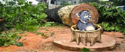Vụ thảm sát cây xanh tại Hà Nội 3-2015 đã được/bị 'phê bình và tự phê bình' đến đâu rồi?