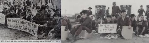 """210 tù binh Việt Cộng xin được ở lại miền Nam VNCH thay vì về với đảng """"Bác"""". Những người tù binh tìm tự do: """"Nếu trao trả cho cộng sản thì chúng tôi tự sát tập thể"""". Nguồn: tài liệu Huỳnh Tâm."""