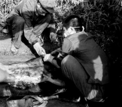 Hai lính TC, Dương Minh (Yang Ming-杨明) và Hoàng (Huang-黄) chính tay họ cắt xén thân thể của nữ tù binh Việt Nam. Nguồn: tài liệu Huỳnh Tâm. [5]